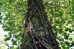 Корни на дереве Стоковые Изображения