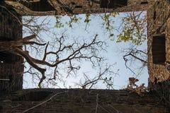 Корни на стенах форта Стоковая Фотография RF