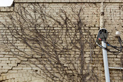 Корни на стене Стоковое Фото