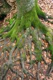корни Стоковое Изображение RF