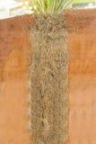 Корни Vetiver стоковое фото rf