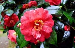 Корнуолл, сады Trewidden Стоковая Фотография RF