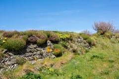 Корнуольская стена Стоковое Изображение