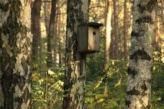 Коробка вложенности в лесе лета Стоковые Фото
