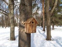 Коробка вложенности на дереве в парке зимы стоковые изображения
