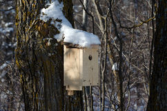 Коробка вложенности синей птицы Стоковые Фото