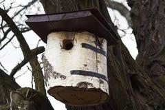 Коробка вложенности для птиц Стоковое Изображение RF