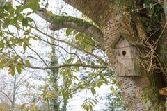 Коробка гнезда птицы в лесе стоковые фото