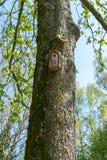 Коробка гнезда/Birdbox - дом для животного птицы Небольшое деревянное здание на дереве в осени и зиме стоковые фото