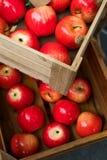 Коробка деревянной клети вполне свежих красных яблок Стоковые Фото