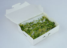 Коробка замороженного брокколи Стоковое Изображение RF