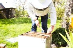 Коробка крапивницы пчелы будучи закуренным для того чтобы утихомирить пчел работника и ободрить их двинуть далеко от открытой кра стоковые изображения rf