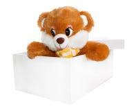 коробка медведя внутри игрушечного Стоковые Изображения