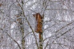 Коробка птицы в зиме Стоковое Изображение