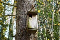 Коробка птицы на дереве в лесе Стоковое фото RF