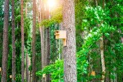 Коробка птицы на дереве в лесе Стоковые Фотографии RF