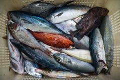 Коробка рыб стоковое изображение