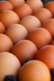Коробка свежих коричневых яичек Стоковое фото RF