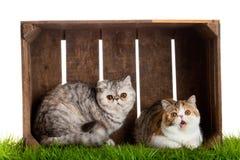 Коробка симпатичного кота деревянная изолированная на белой предпосылке Стоковые Фото