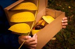 Коробка с листьями осени Стоковые Изображения