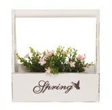 коробка цветет розовый завод Стоковое Изображение RF