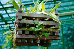 Коробка цветка Стоковая Фотография RF