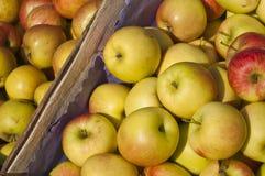 коробка яблок Стоковая Фотография RF