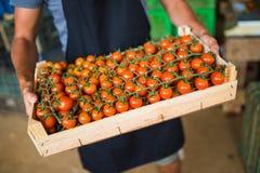Коробки вполне свежих овощей томата для рынка на рознице Стоковая Фотография RF