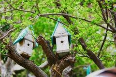 2 коробки вложенности для птиц Стоковая Фотография RF