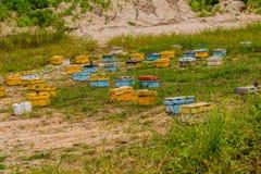 Коробки крапивницы пчелы меда различных цветов Стоковое фото RF