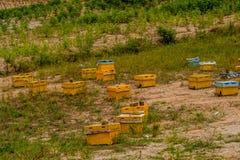 Коробки крапивницы пчелы меда различных цветов Стоковая Фотография