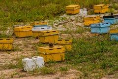 Коробки крапивницы пчелы меда различных цветов Стоковое Изображение RF