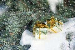 Коробки подарка на дереве зимы с снежностями Стоковая Фотография RF