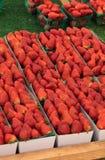 Коробки свежих зрелых красных органических клубник Стоковая Фотография RF