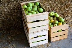 коробки яблок Стоковое Изображение