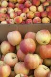 Коробки яблок Стоковые Изображения RF
