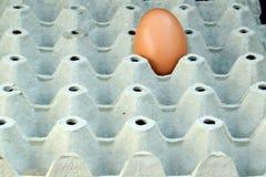 Коробки яичка с одним яичком Стоковые Фото
