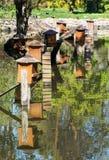 Коробки для вложенности водоплавающей птицы отражены в воде Стоковое фото RF