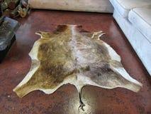 Корова Брайна упала рядом с софой стоковая фотография rf