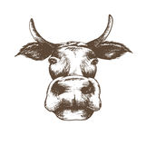 Корова вектора эскиза изолированная иллюстрацией белая Стоковое фото RF