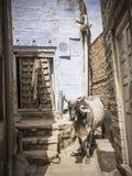 Джодхпур, Раджастан Стоковое Изображение
