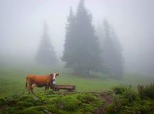 Корова в лесе Стоковое Изображение