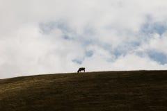 Корова и небо стоковое изображение rf