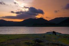 Корова на озере Стоковые Изображения