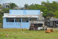Корова на рыбацком поселке Ne Mui Стоковые Фотографии RF