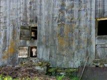 Корова смотря из окна Стоковая Фотография RF