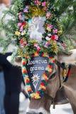 Корова ТИРОЛЯ АВСТРИИ 2015 с головным убором во время a Стоковое фото RF