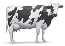 корова Стоковое фото RF