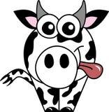 корова clara Стоковые Фотографии RF