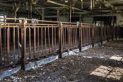 Коровник Dilapitated Стоковое Фото
